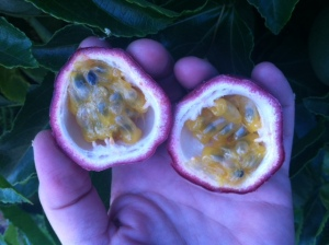 Passion Fruit flesh